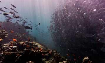 New global climate report shows we need to help our oceans help us