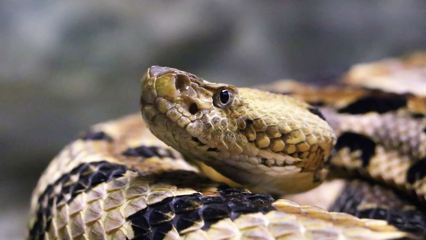 coiled up snake