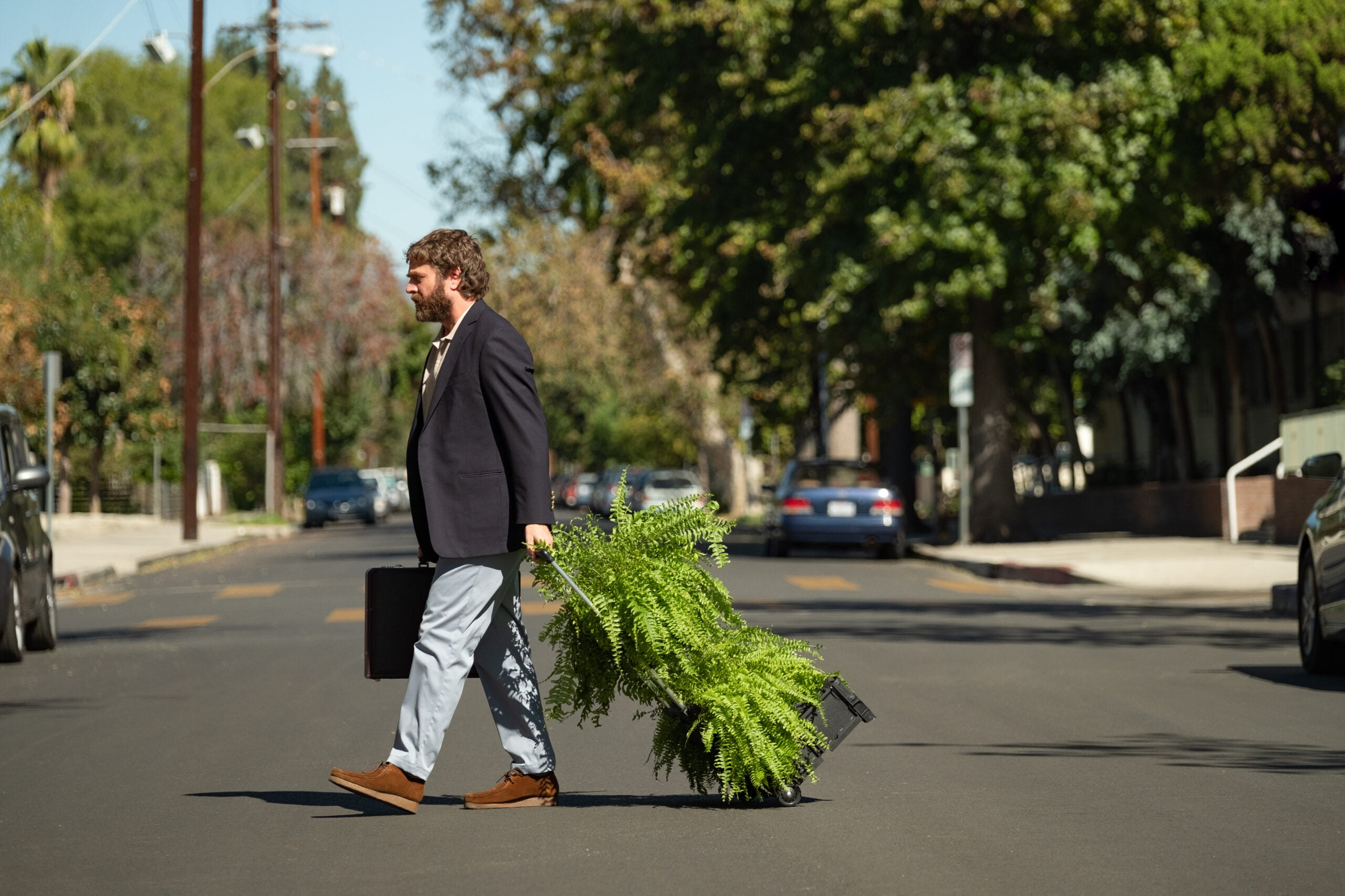 An intimate guide to the ferns from Netflix's 'Between Two Ferns'