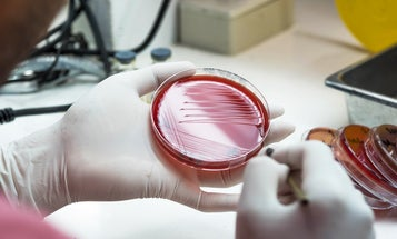Bacteria can change inside of us to beat antibiotics
