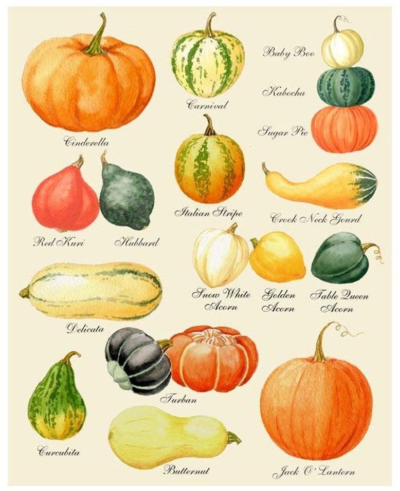 Curious Print Pattern pumpkin and squash drawing