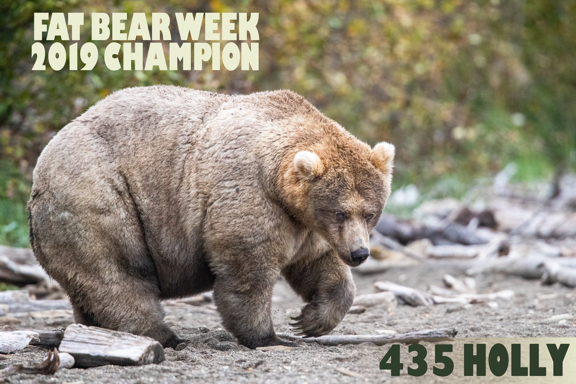 All hail Holly, the queen of Fat Bear Week