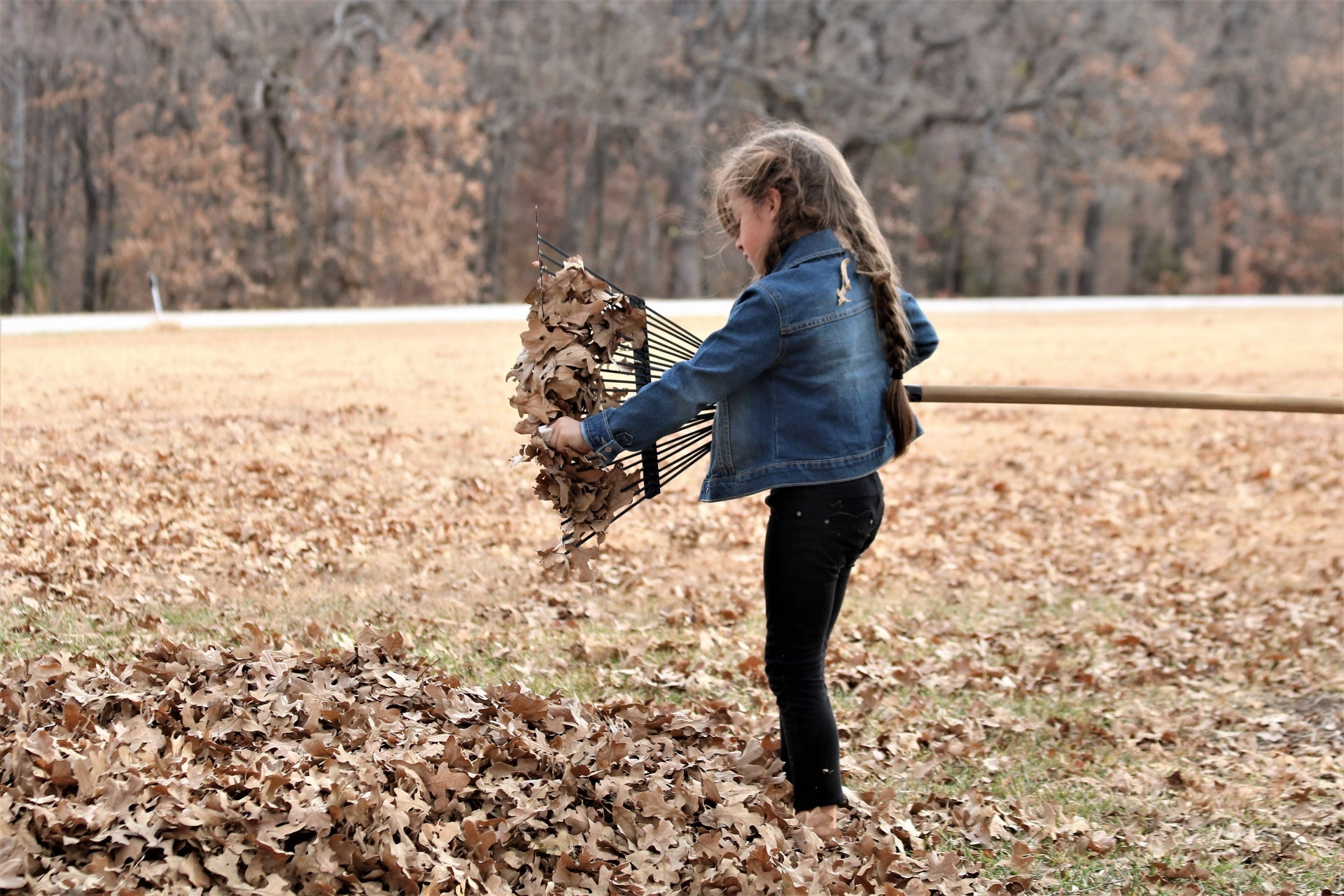 Hate raking leaves? There's an easier method.