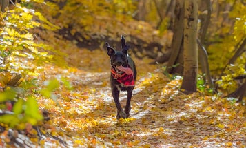 Outdoor dog gear for safer adventures with your best friend