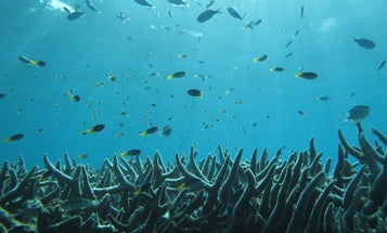 Global warming is forcing species to reorganize their ecosystems