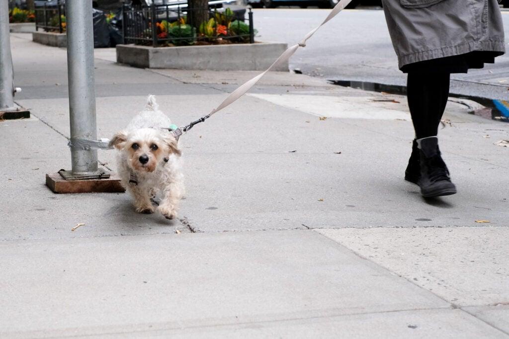 small dog on a leash