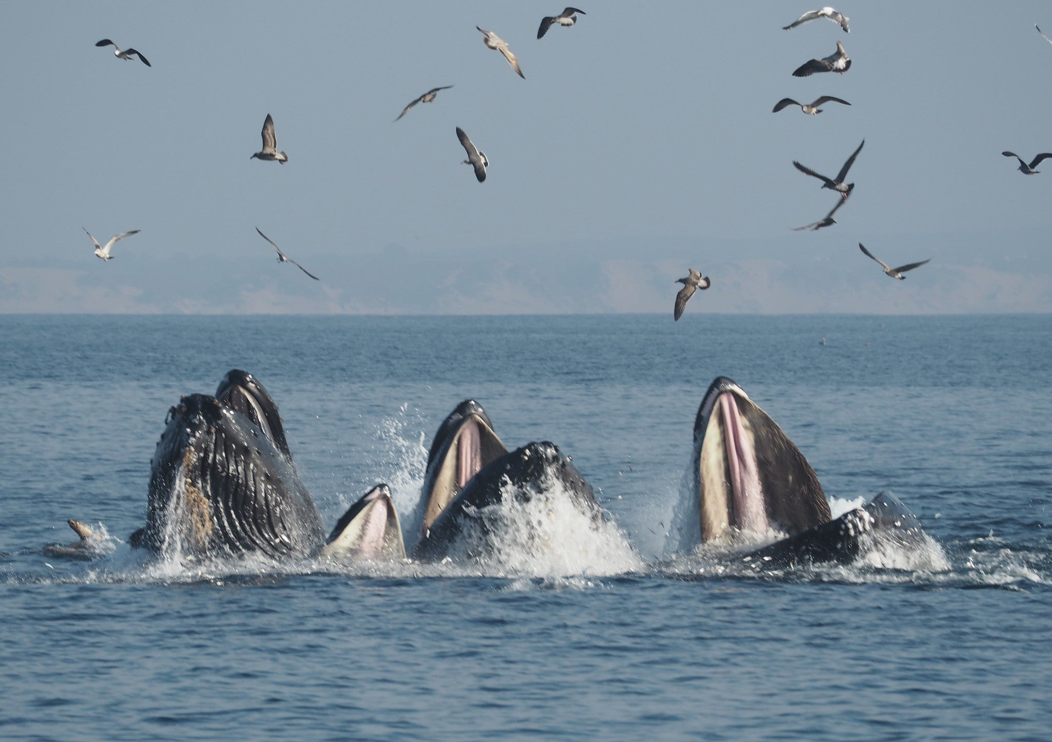 Finally, some good news about humpback whales