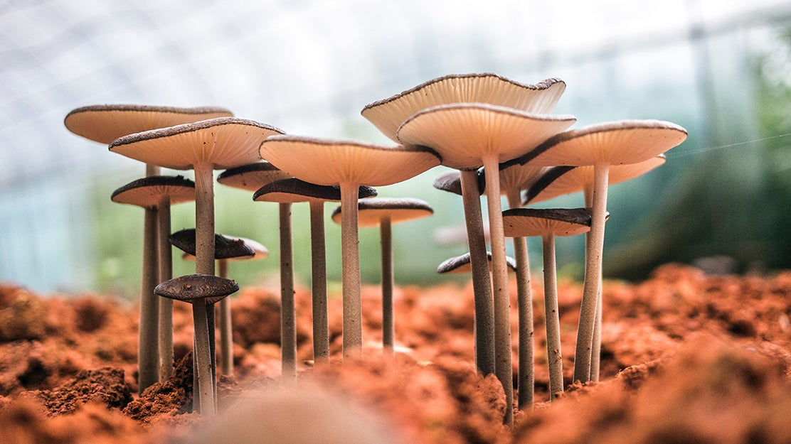 Kits to help you grow your own mushrooms