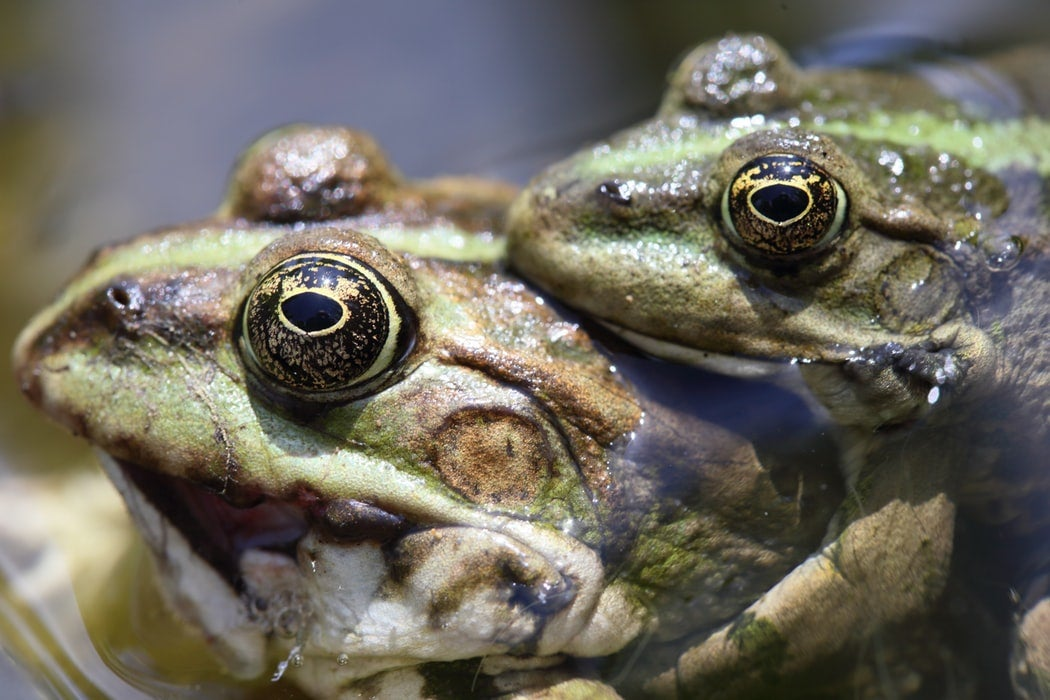 Frogs in tiny taffeta shorts paved the way for human in-vitro fertilization