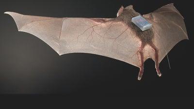 Female vampire bats regurgitate bloody dinners for their starving girlfriends