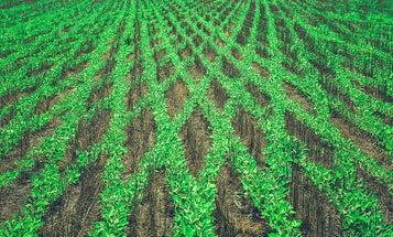 Brazilian farmers owe Monsanto $7.7 billion, court rules