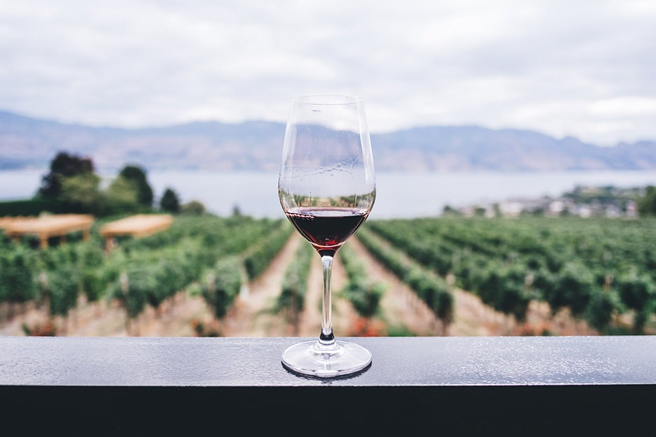 glass of wine at a vineyard