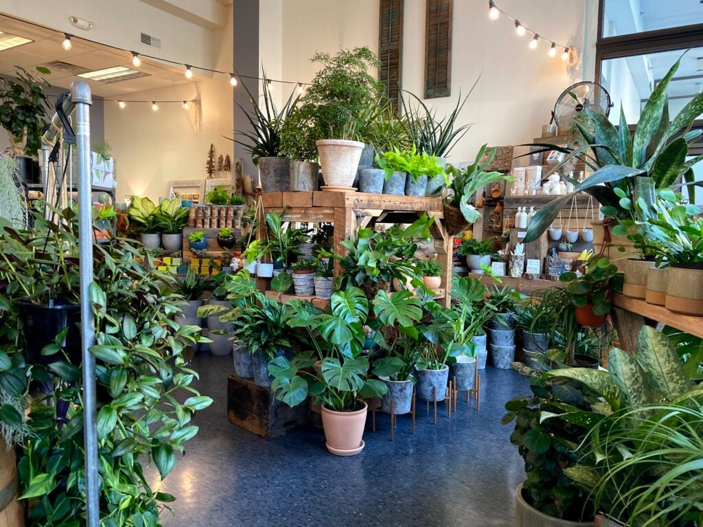 Regular lens example plant store.