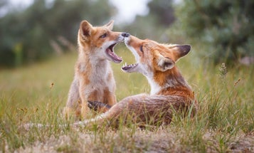 Why do some animals engage in same-sex sexual behavior? The better question is… why not?