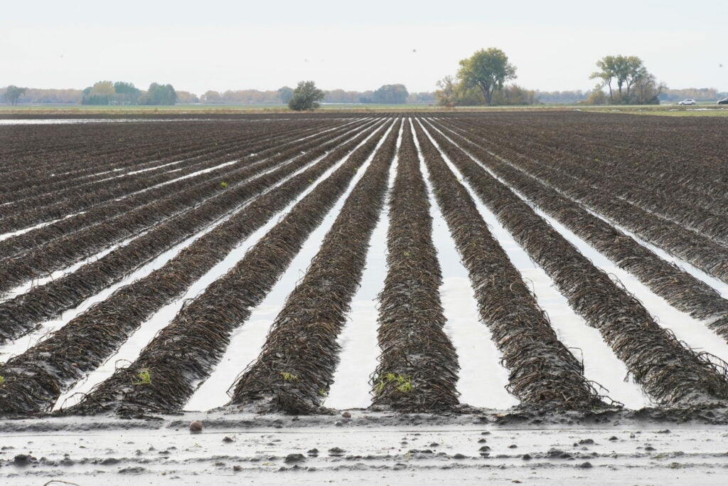 flooded rows of crops