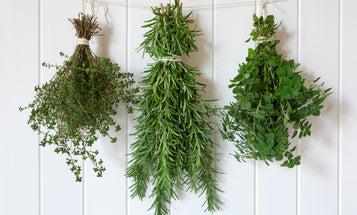 Three tricks to make your fresh herbs last year-round