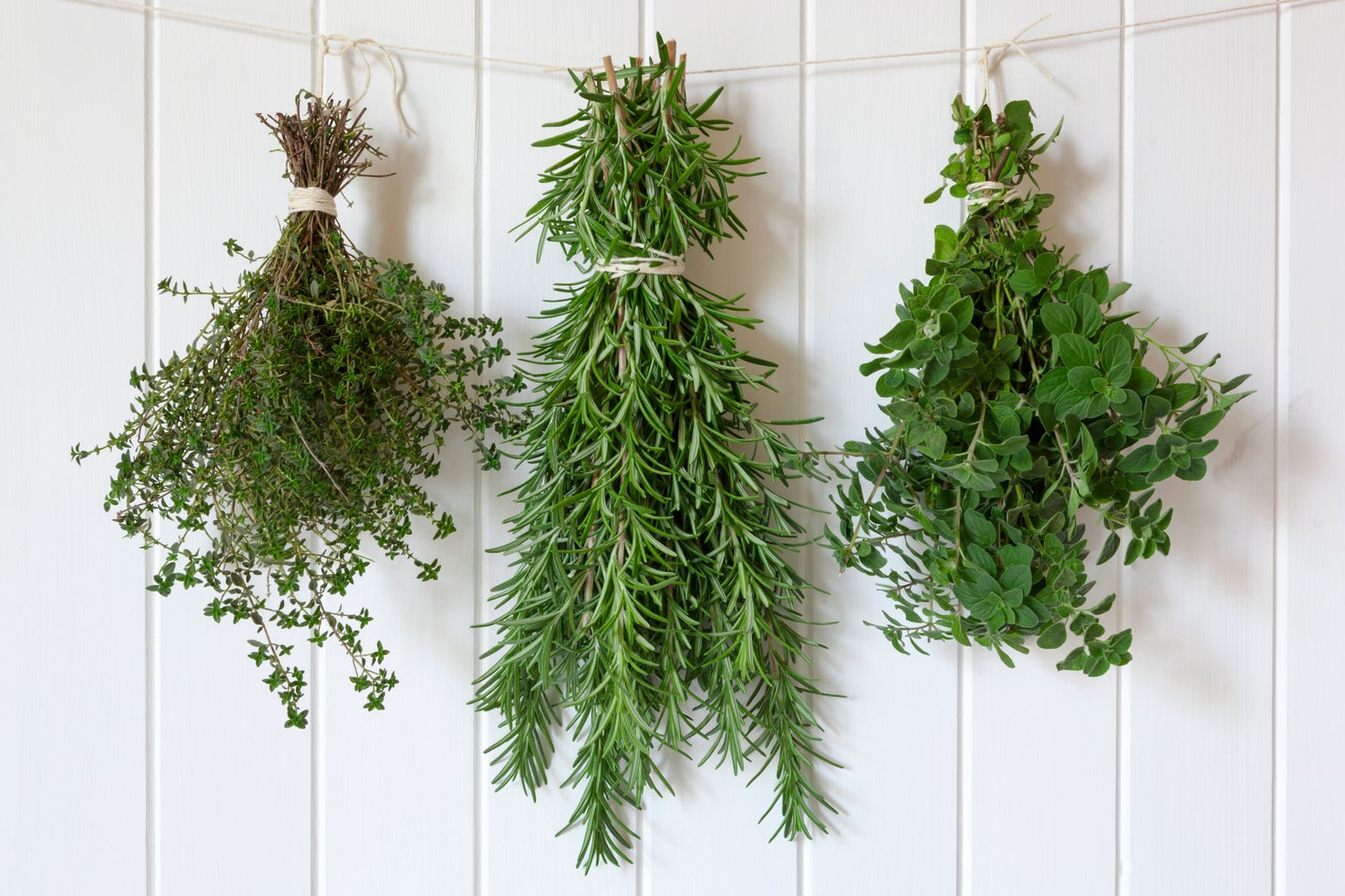 Bunches of fresh herbs hanging over white timber.  Includes thyme, rosemary and oregano.