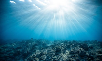 Scientists have found an unlikely ally in the fight to save coral reefs