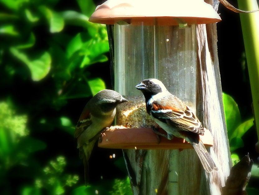 two birds on a feeder