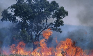 Australia's historic bushfires could impact the world's biodiversity forever