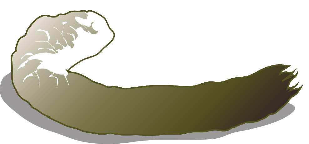 Wild turkey poop illustration.