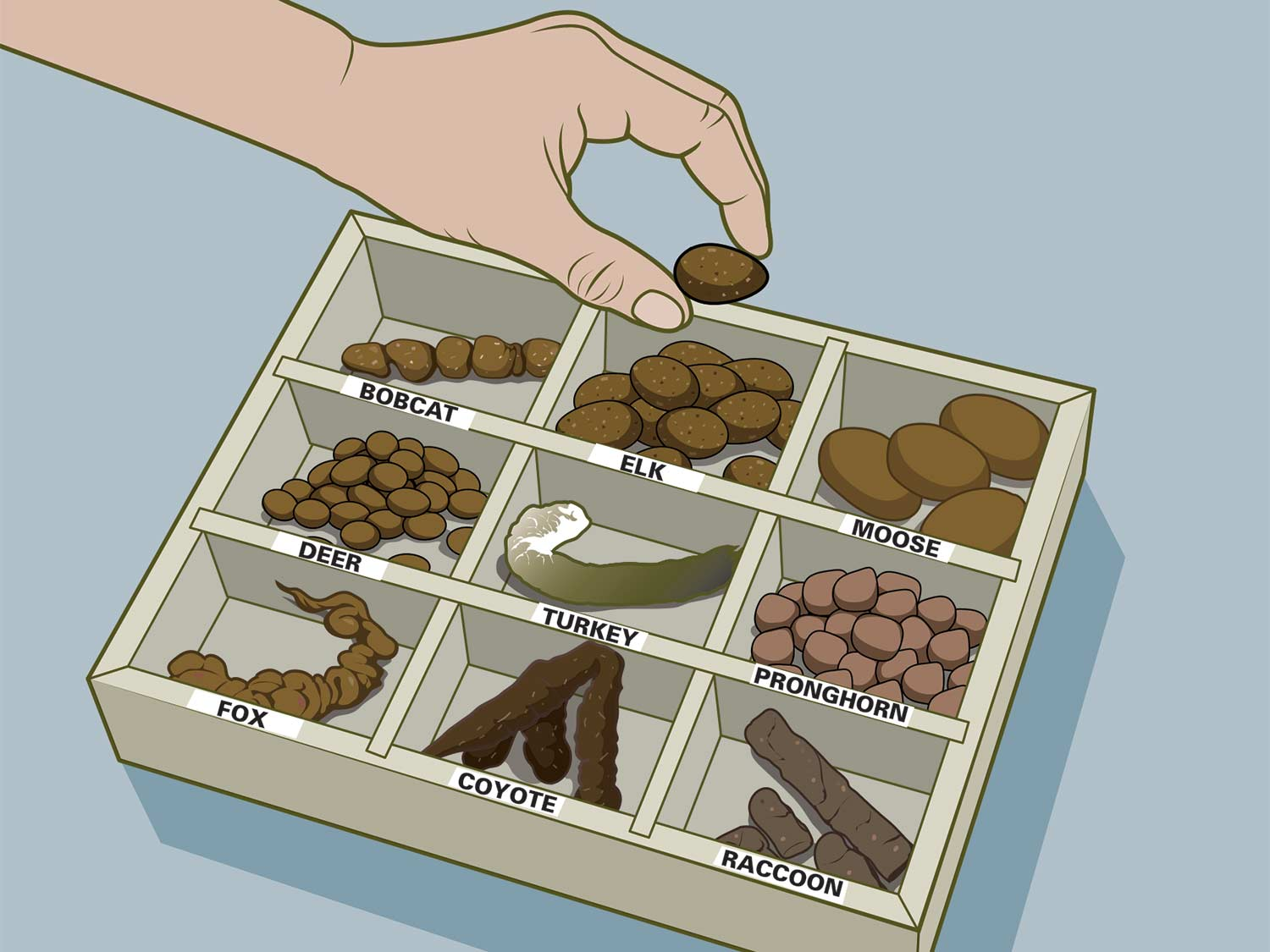 Illustration of a box of wild animal poop.
