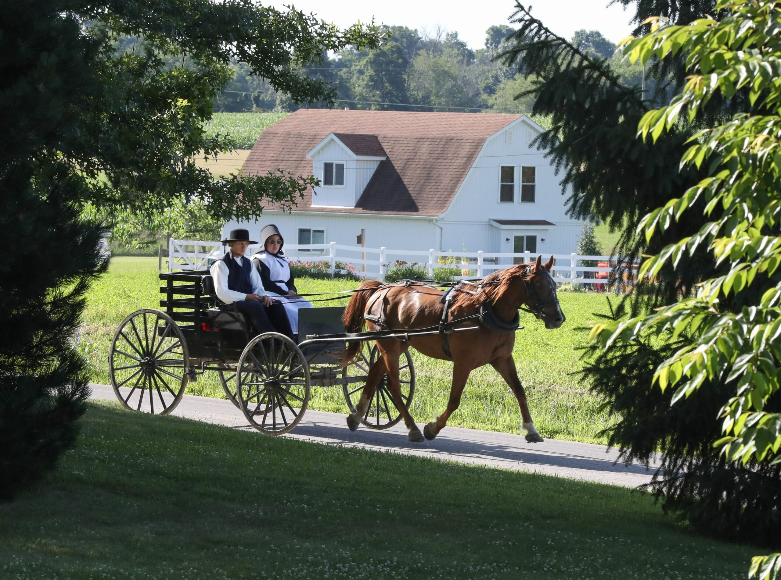 Amish couple riding on a horse-drawn wagon
