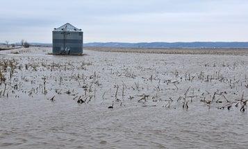 Last year's historic floods ruined 20 million acres of farmland