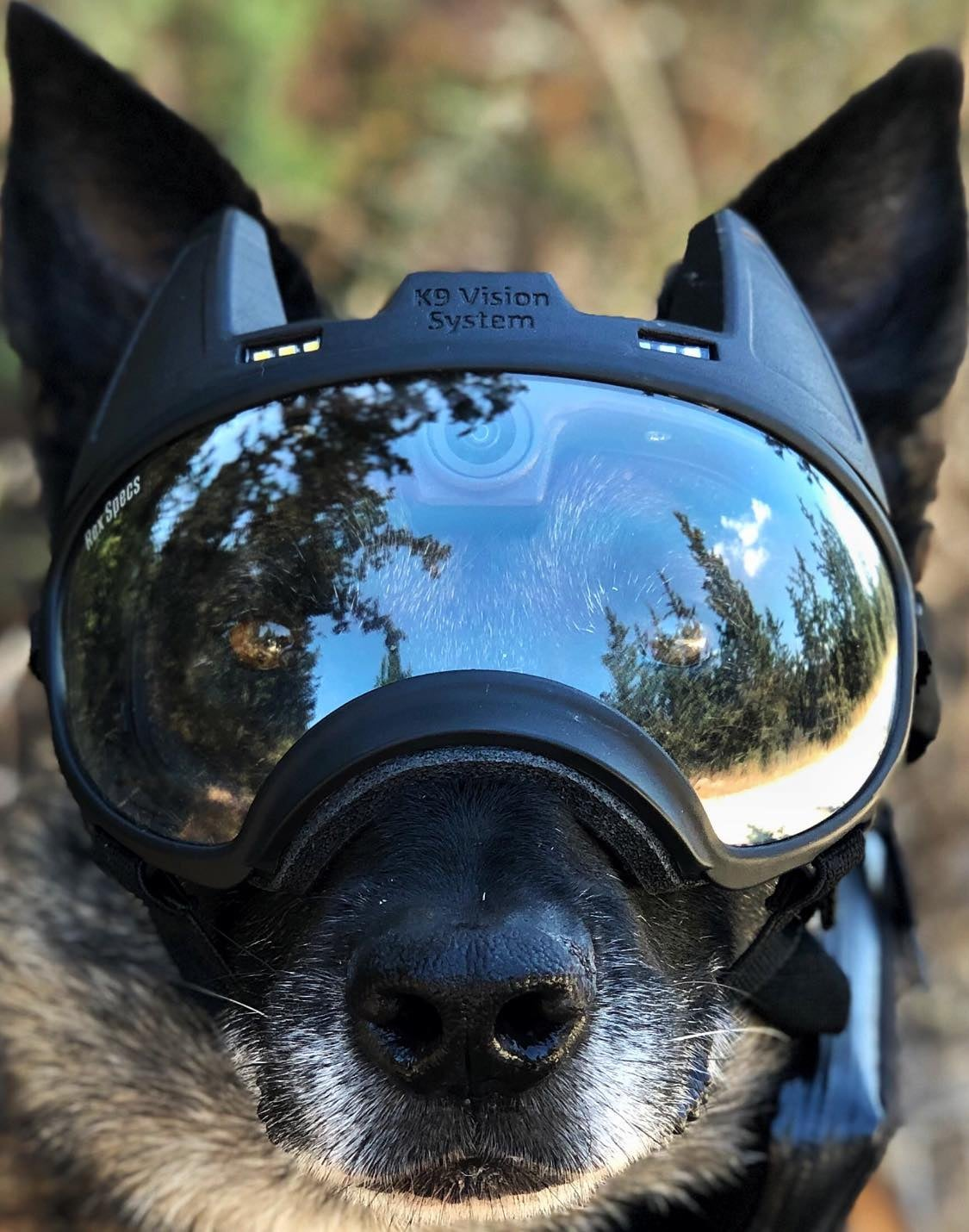 special forces dog goggles