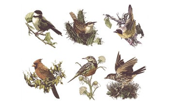 See how birds change their tunes to fit their surroundings