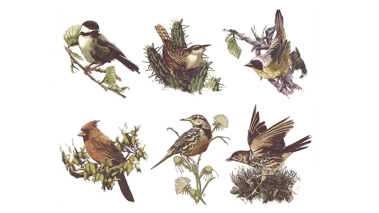 How birds got their groove