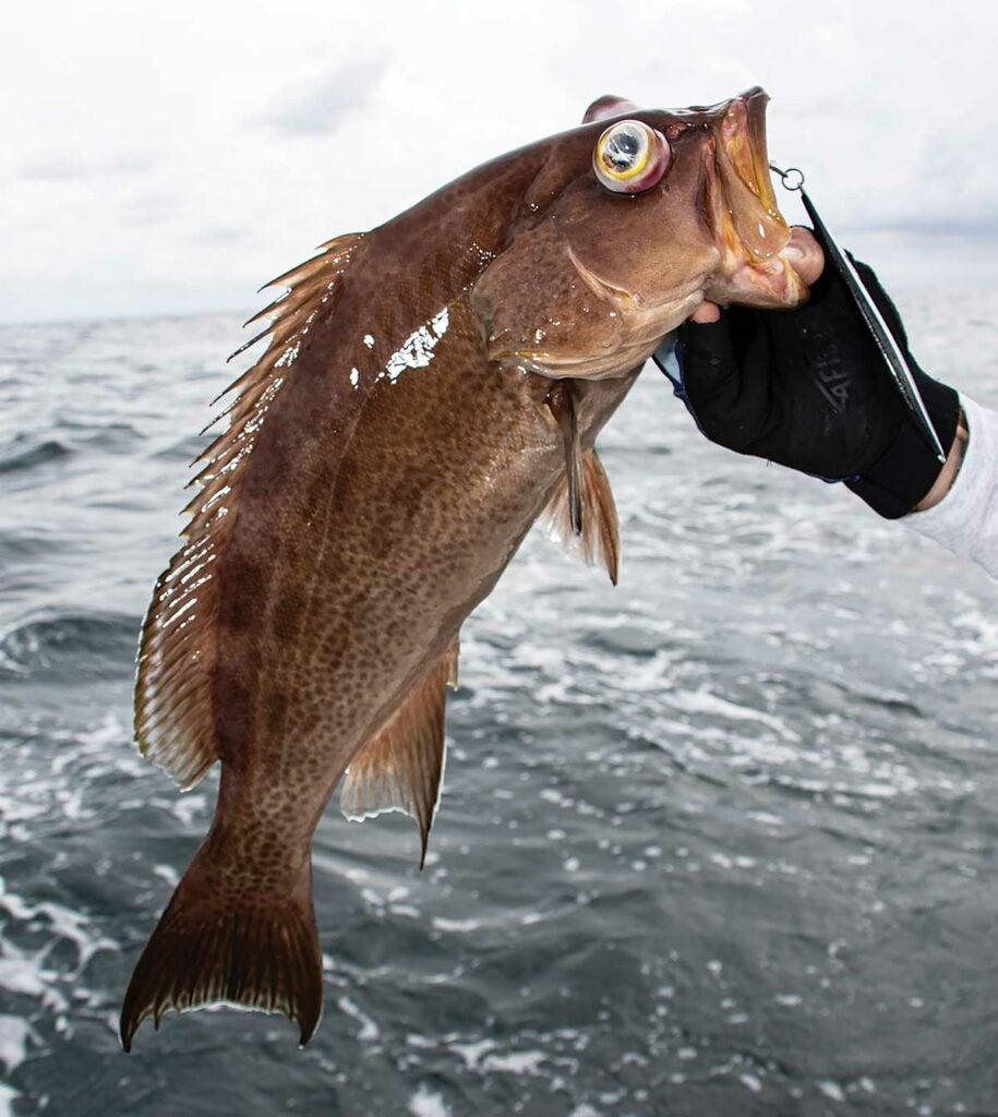 Bottomfish with barotrauma