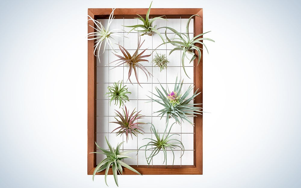 Mkono Large Air Plant Frame Hanging Airplant