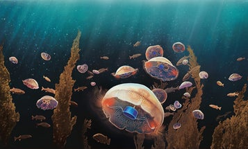 Bionic jellyfish can swim three times faster