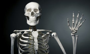 You'll never have as many bones as you did at birth (and other strange skeleton facts)