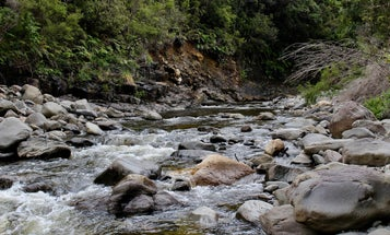 How to find drinkable water in the wild
