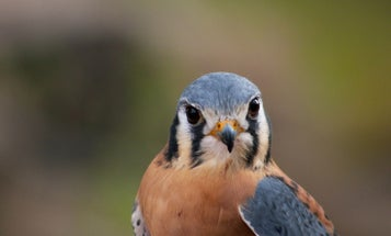 One of the most important laws protecting birds in the US just got gutted