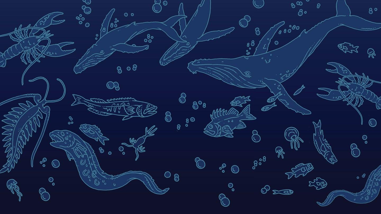 aquatic life illustration