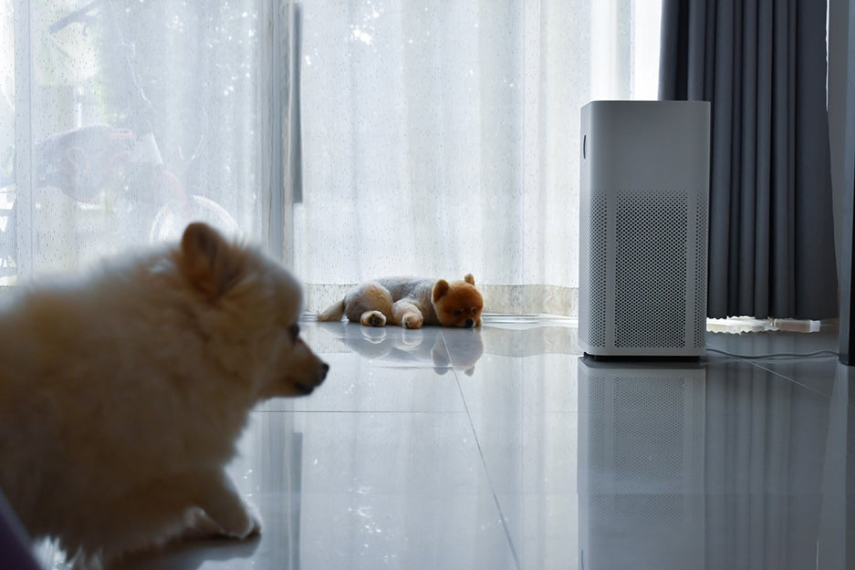 Dogs next to an air purifier