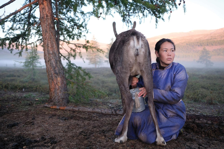 Mongolian woman milking an animal