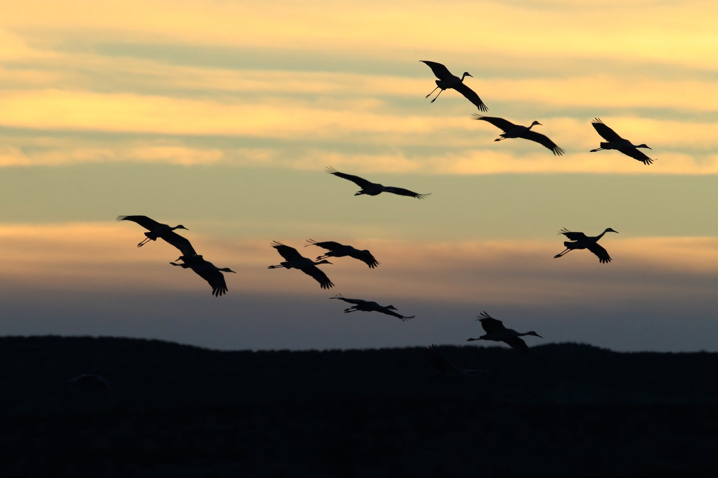 Sandhill cranes fly off from their wintering grounds at Bosque del Apache Wildlife Reserve in New Mexico.