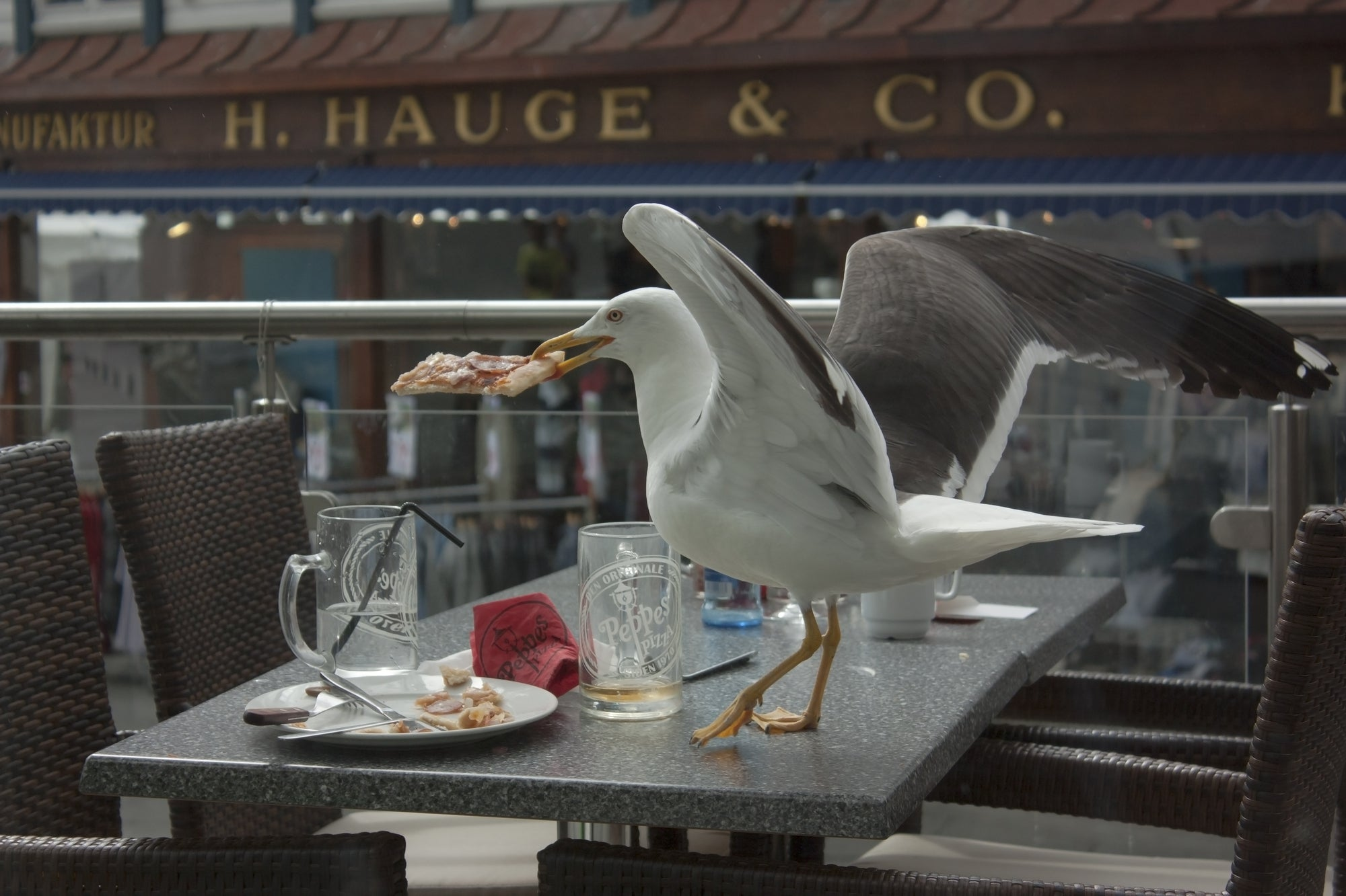 a seagull eating a piece of pizza on a restaurant table