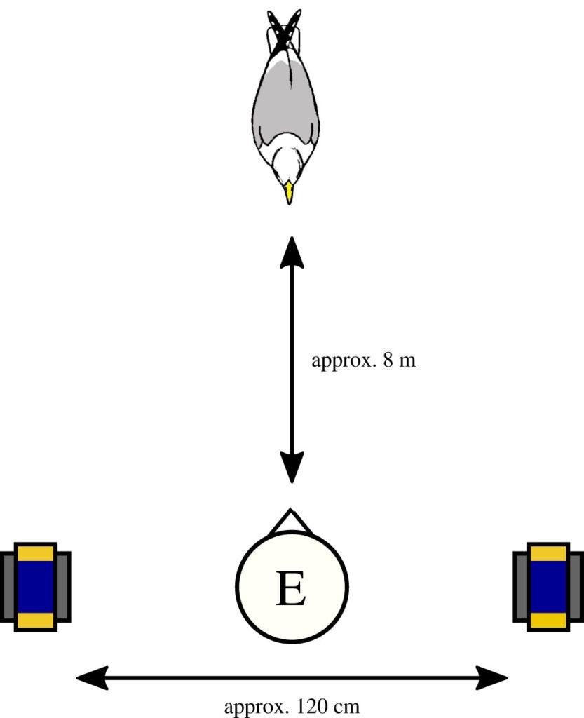 A diagram of a bird