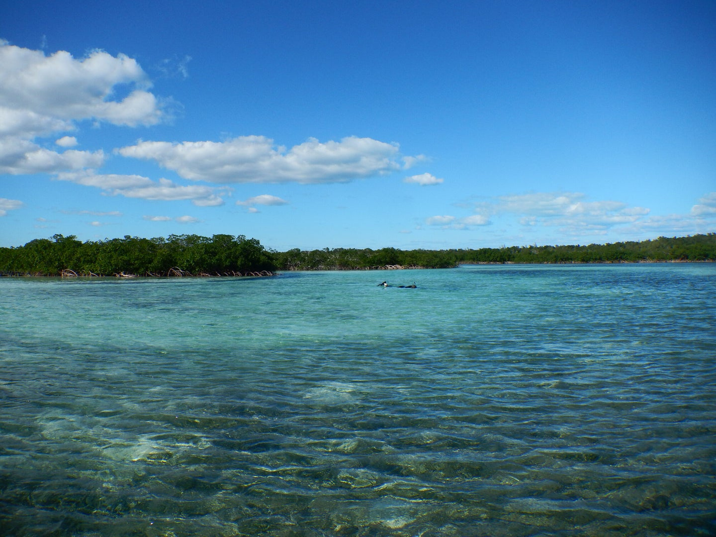 The mangrove-lined estuary on Abaco Island in the Bahamas.
