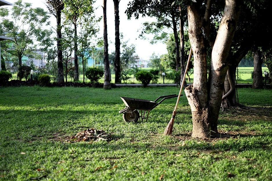 wheelbarrow in a yard