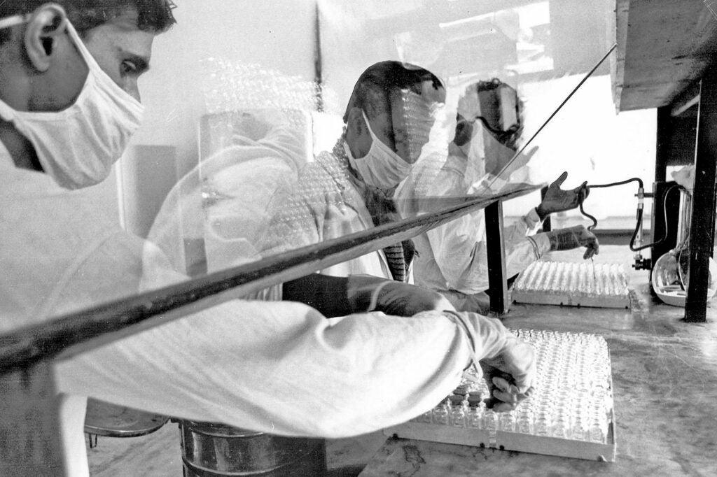 Production of the smallpox vaccine.