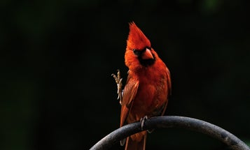 How to start birding in any US city