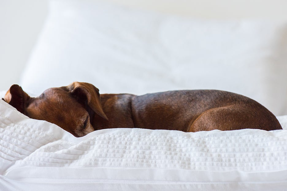 dog sleeping in a bed