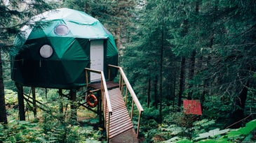 a green plastic dome treehouse in a forest