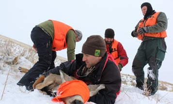 GPS collars help wildlife researchers answer important questions